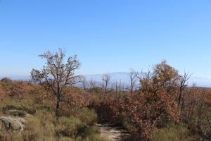 along the camino de las raices