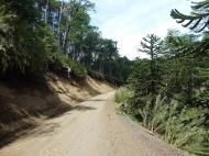 graved trail