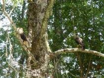 2 birds on a tree