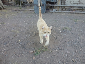 red cat near RN25