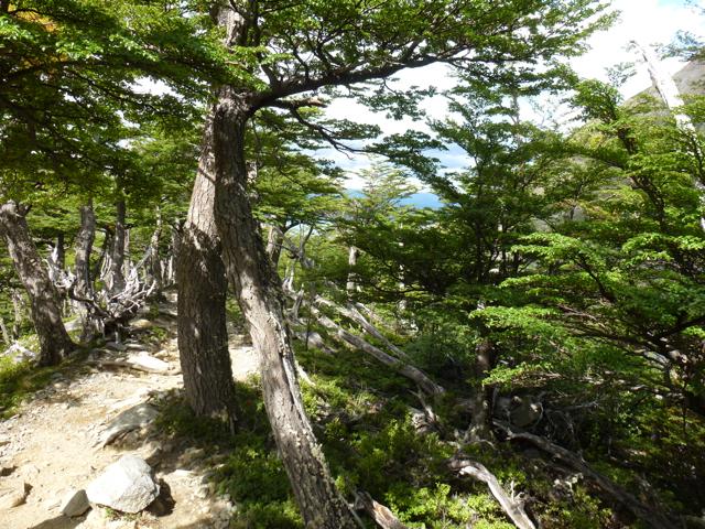 trail to lookout glacier francés