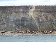 sea lions and cormorans on Isla Marta