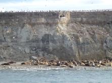 sea lions and cormorans on Isla Marta