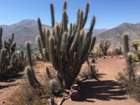 Monumento Natural Pichasca