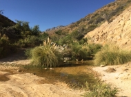 water hole on way from Hurtado to Vicuña