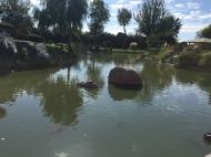 La Serena Jardín Japonés