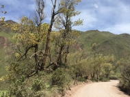 way from El Carril to Cachi trees at 2.500m