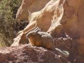 Viscacha Laguna Katal