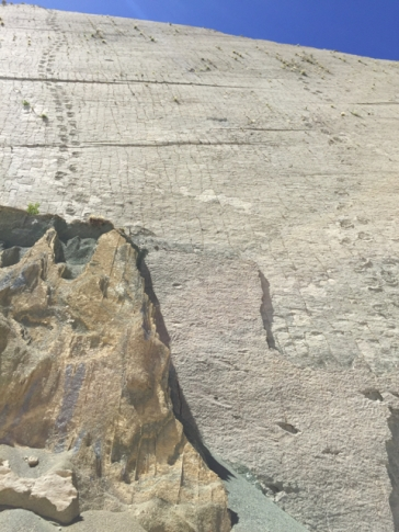 Dino's footprints