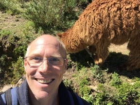 Alpaca on Isla del Sol