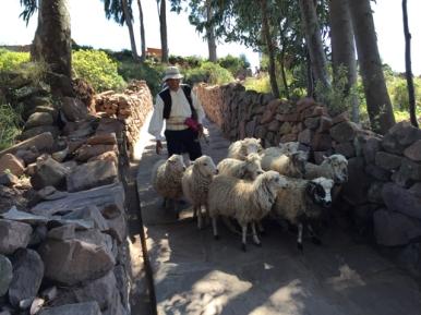 Taquile shepherd