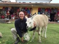 Llama in Cusco