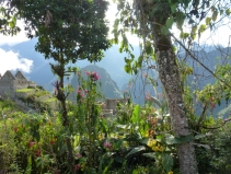 Machu Picchu Botanic garden