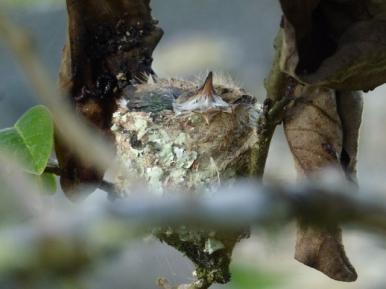 hummingbird nets Machu Picchu