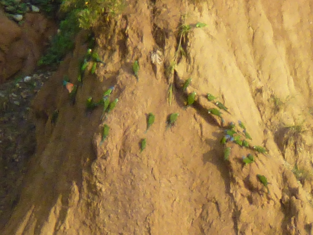 loam wall with parrots
