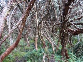 paper trees in El Cajas National Park