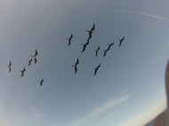 birds on Galapagos