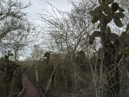 way to Tortuga Bay