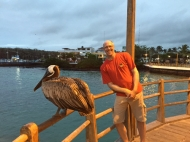 pelican and me