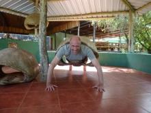 in tortois' body