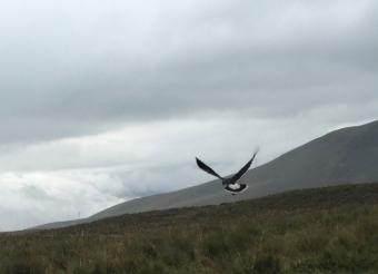 eagle near Pichincha Quito