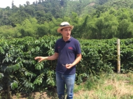 coffee tour Hacienda Venecia Manizales
